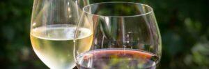 Nie wieder orientierungslos bei der Weinauswahl